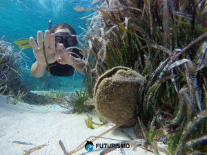 Snorkeling Asinara Escursioni
