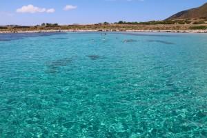 Escursioni naturalistiche barca Asinara.