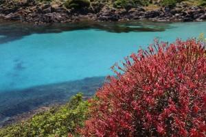 come visitare il parco nazionale dell'asinara