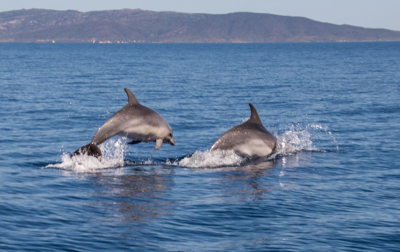 Delfini, Avvistamento cetacei