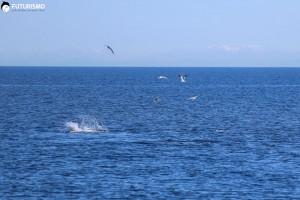 tonni Golfo di Cala Reale, Parco Nazionale dell'Asinara