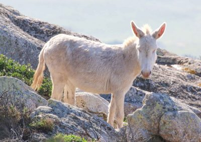 Walking Safari e Trekking Asinara