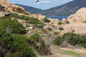 Vicino alla zona riserva integrale Parco Nazionale dell'Asinara