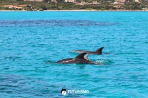 Avvistamento Delfini Asinara