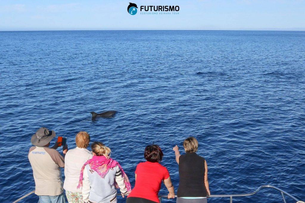 avvistamento dei delfini durante le escursioni all'Asinara