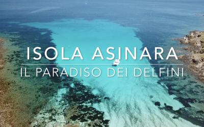Isola Asinara il paradiso dei delfini