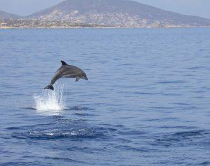 delfino asinara