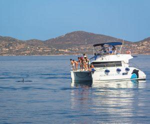 Avvistamento delfini nelle acque dell'area marina protetta isola dell'Asinara con a bordo le guide di futurismo escursioni asinara